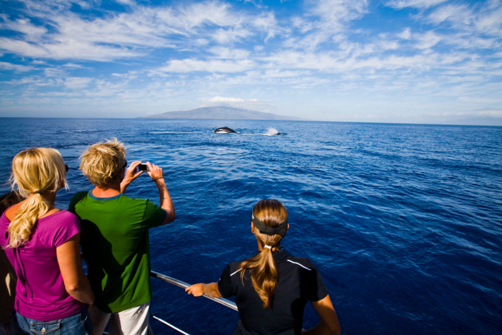Whale watching in Hawaii from a cruise.