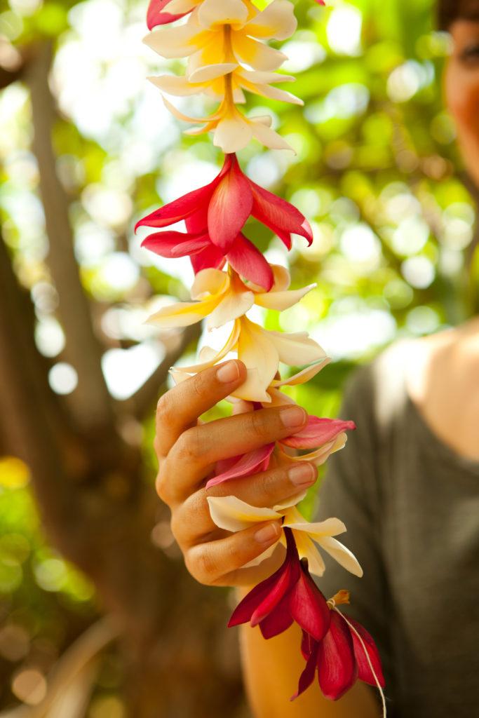 How to make a lei using fresh plumeria flowers.