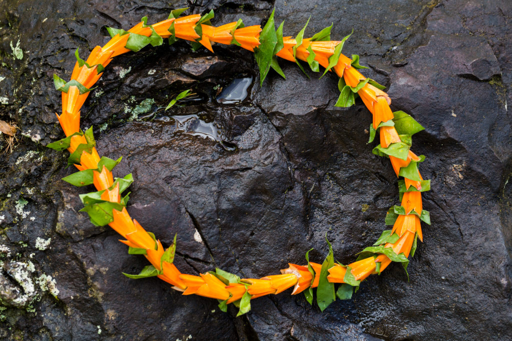 One of my favorite Hawaiian lei, the bright orange hala lei.