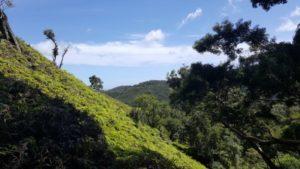Kaunala Trail view: Hawaii travel. Things to do in Oahu. Things to do in Hawaii.