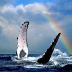 Hawaii's Humpback Whales Hotspots