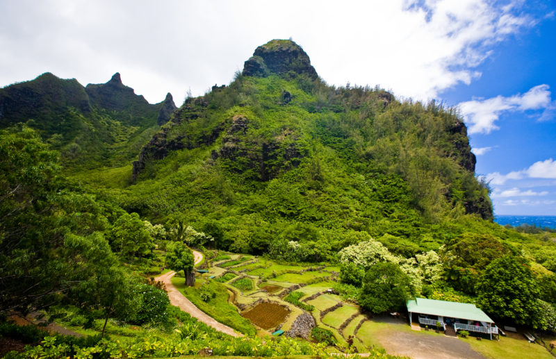 A taro farm experience will connect you to Hawaiian culture.