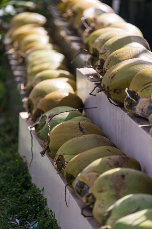 Coconuts in a row.