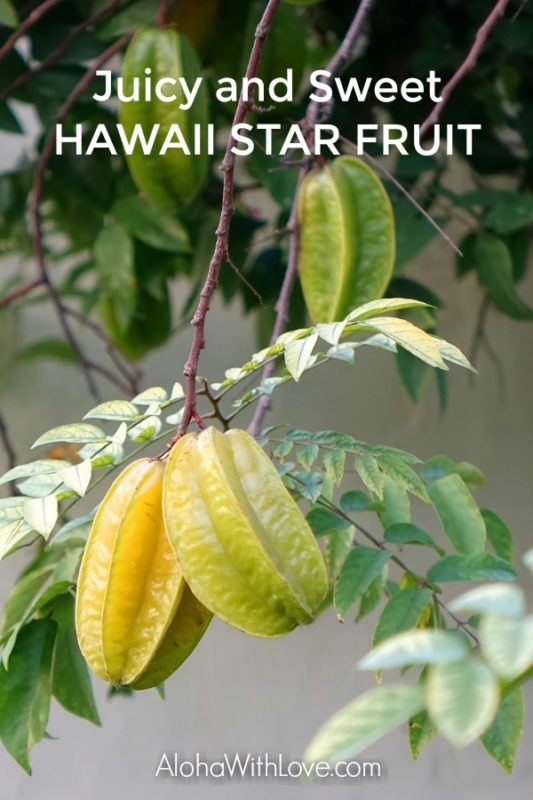 Star fruit in Hawaii