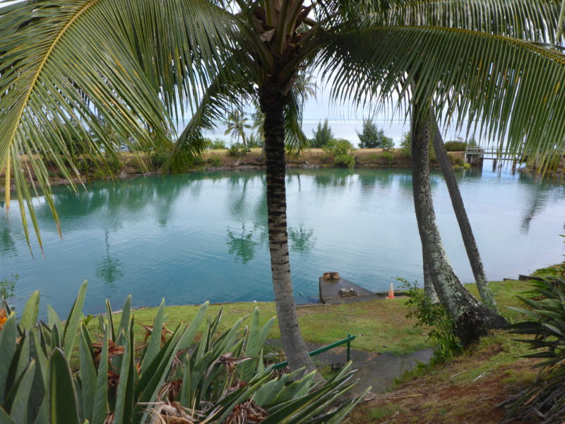 Coconut Island's self-cleaning saltwater pool.