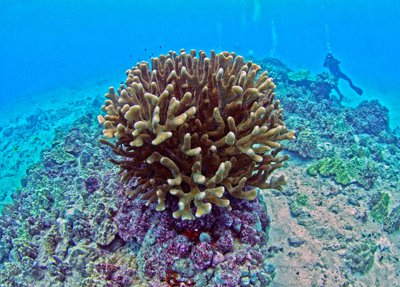Studying coral.