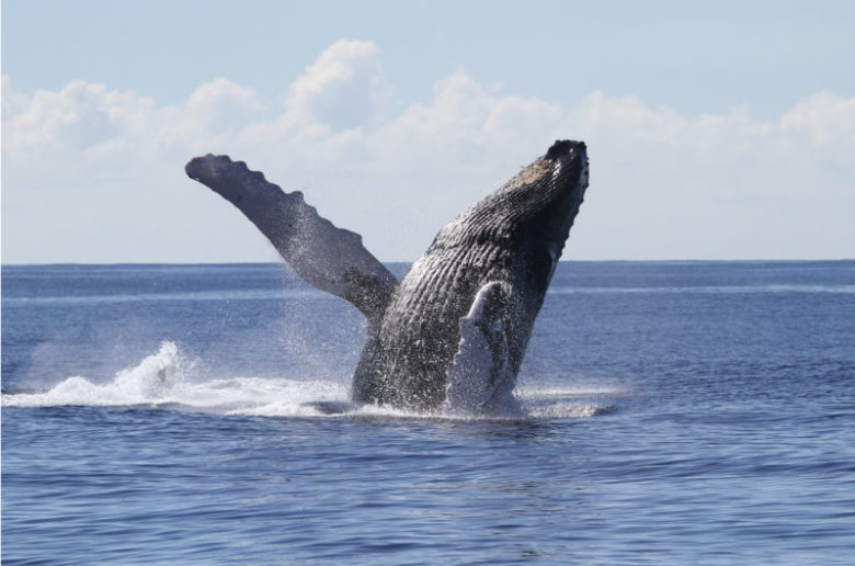 Whale watching from The Majestic (Atlantis Adventures)