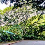 Oahu Photography Tour