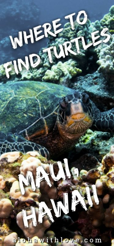 Here's a guide on how to find turtles on Maui, Hawaii. Maui is a wonderful place to snorkel and discover ocean life and one of the best creatures you'll come across are the turtles that hang out on Hawaiian shores. Find out which spots are the best for turtle spying in this Maui turtle guide.