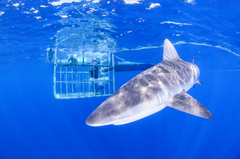 150 Things To Do On Oahu - dive with sharks.