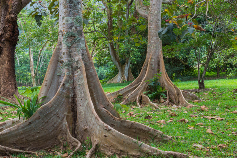 Hoomaluhia Botanical Garden - a walk is really enjoyable here.
