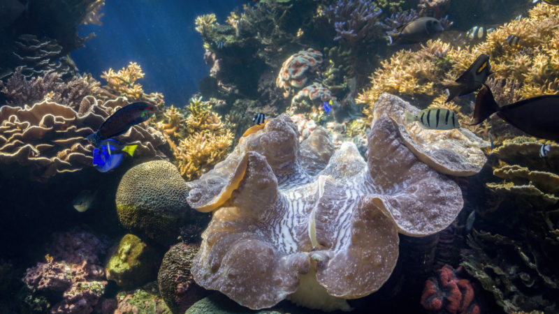 150 Things To Do On Oahu - Waikiki aquarium.