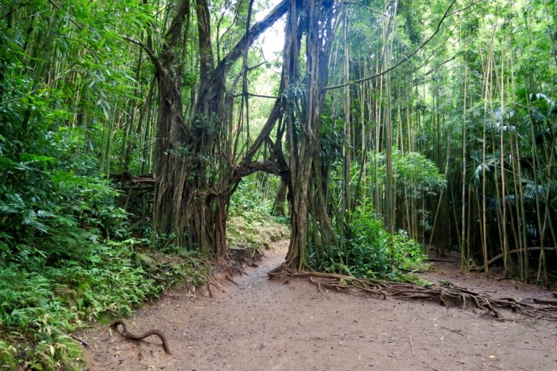 Get Your Feet Muddy And Wet At Manoa Falls