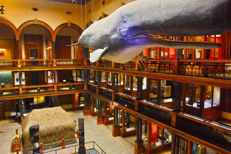 150 Things To Do On Oahu - Bishop museum.