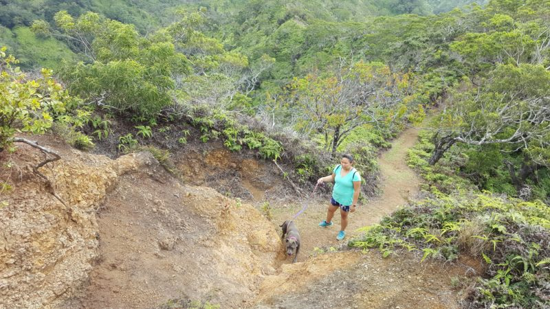 Hiking up the dirt and rocky path at Manana trail.