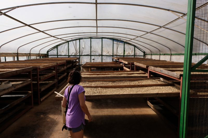 During the old Waialua sugar mill's coffee and chocolate tour, Mom takes a look around where the drying process happens for the coffee and chocolate.