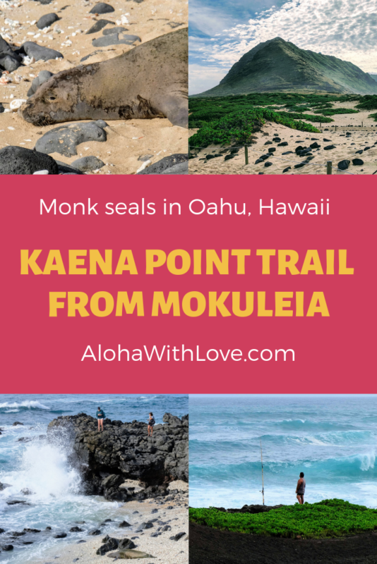 If you're looking for a flat hike in Oahu, Hawaii with fantastic views, try the Kaena Point hike! It's a popular place to see Hawaiian monk seals and you can see plenty of humpback whales during our whale watching season. - Kaena Point Oahu | Kaena Point hike | Kaena Point Hawaii | Kaena Point seals | Kaena Point state park | Kaena Point north shore | Hawaiian monk seals | Oahu state park | Hawaii state park | easy Oahu hike | easy Hawaii hike | Aloha With Love