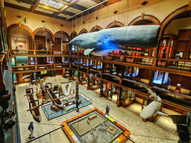 The Hawaiian Hall from the 3rd floor | Bernice Pauahi Bishop Museum