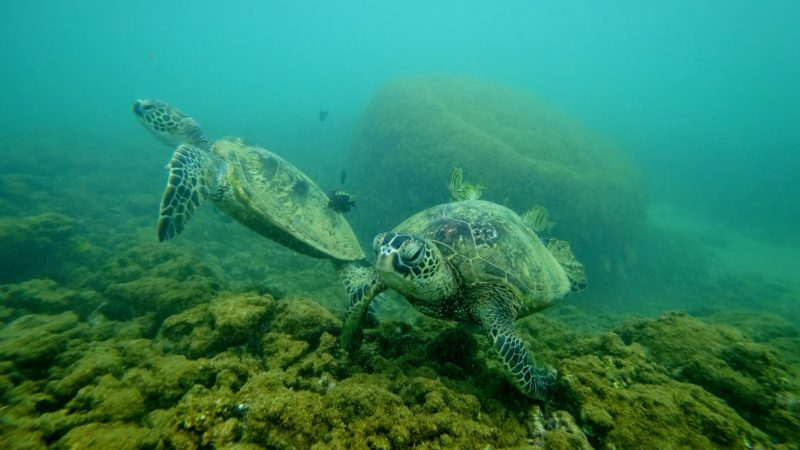 Turtles at Aweoweo Beach Park while snorkeling.