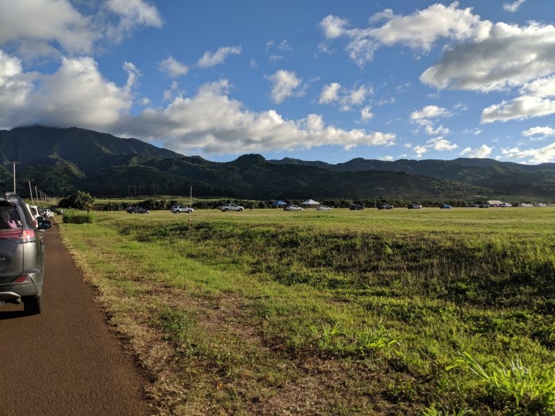 Lining up at the Waialua sunflower fields