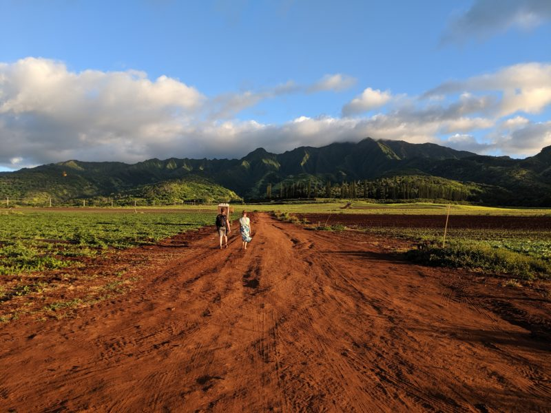 Waianae mountains from Waialua Sunflower Fields