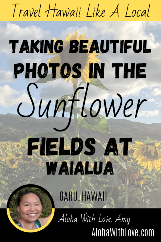 Taking Beautiful Photos In The Sunflower Fields At Waialua