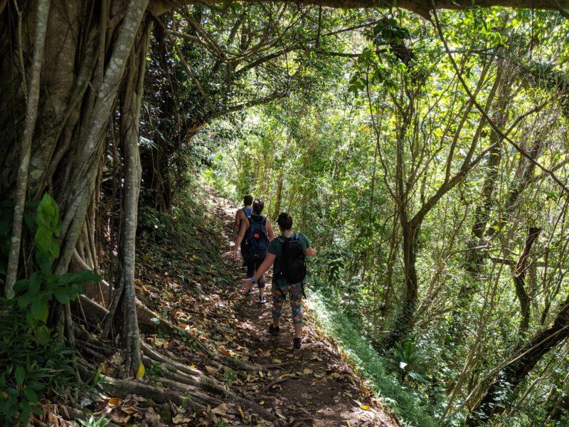Makiki Valley Trail.