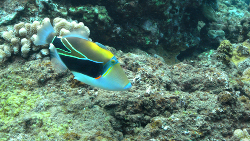 Kuilima Cove In Turtle Bay Resort Is Great For Beginner Snorkelers