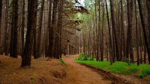 Waihou Spring Trail.