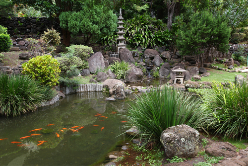 Koi pond in Iao Valley State Park.