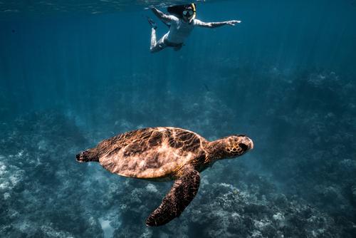 Swimming with a green sea turtle off the coast of Lanai, Hawaii.
