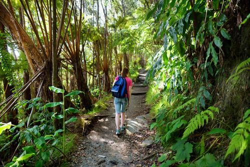 Hiking on the Kilauea Iki Trail in the Hawaii Volcanoes National Park on the Big Island, Hawaii.