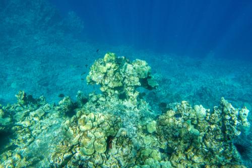 Best beaches in Hawaii: Kealakekua Bay. Hawaii travel. Things to do in Big Island. Things to do in Hawaii.