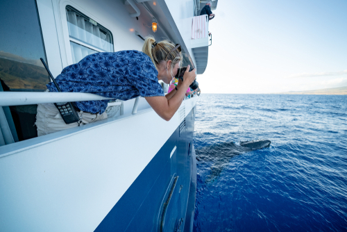 A crew member on a whale watching cruise snaps a photo of a curious humpback whale in Hawaii.