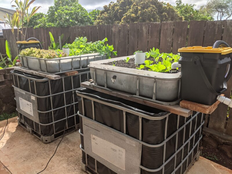 My IBC chop-and-flip aquaponics system in the backyard originally had one bucket solids filter each.