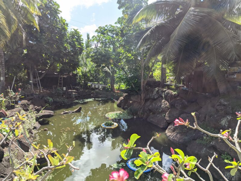 There's a large pond with some pretty koi inside.