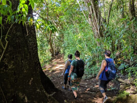 My friends and I hiking the Makiki Valley Loop Trail.