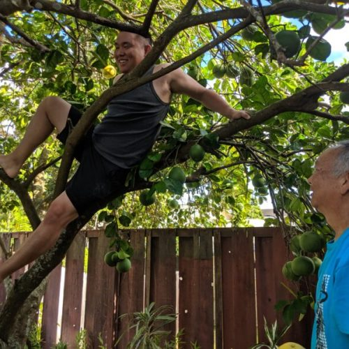 Michael climbing the jabon tree.