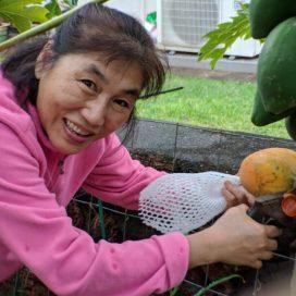 Mom picking a papaya.
